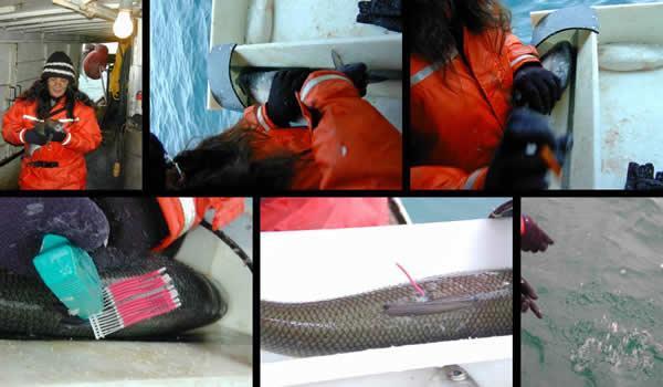 Whitefish Population Discrimination – Chippewas of Nawash